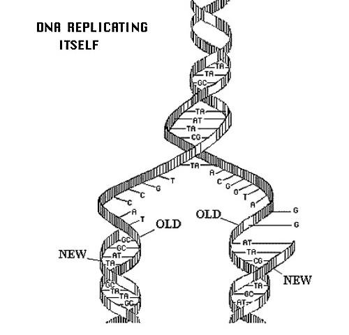 DNA (2000)